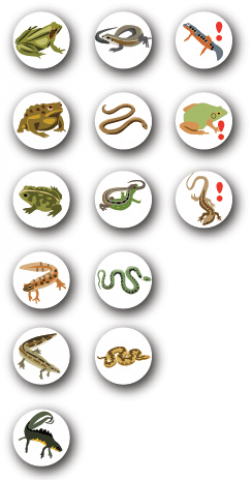 Reptile and amphibian species Icons