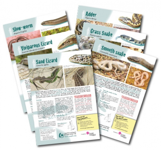 Reptile identification and information sheets designed for ARG UK